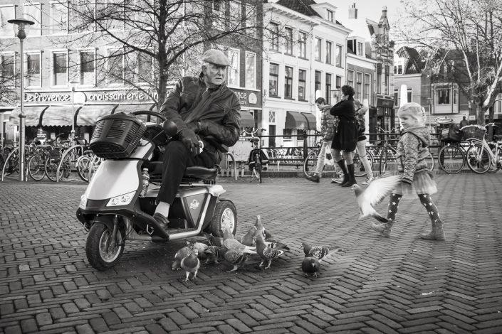 zeeland-pigeon-noir-et-blanc
