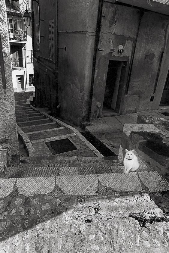 vieux-cannes-chat-blanc